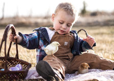 Easter Chicks in a Basket. Little boy on an Easter egg hunt with chicks and eggs in his basket Royalty Free Stock Images