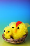 Easter chicks on blue background Stock Photos