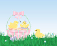 Easter Chicks are Born. Two Easter chicks hatch from Easter eggs while a third chick standing in the grass looks on. Two chicks sit in an Easter basket Royalty Free Stock Photos