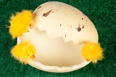 Easter chicks on a broken eggshell Stock Photos
