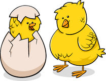 Easter chicks cartoon illustration Stock Photography