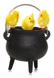 Easter chicks in a cauldron Royalty Free Stock Images