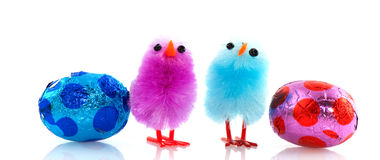 Easter chicks with chocolate eggs Stock Photography