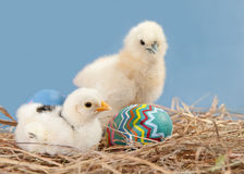 Easter chicks with colorful painted easter egg Stock Photography