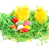 Easter chicks with a colourful clutch of eggs Stock Photography