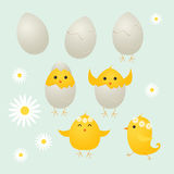 Easter Chicks. Cute easter chicks and eggs,  illustration Royalty Free Stock Image