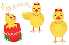 Easter chicks design elements. Easter design elements with three cute chicks. One is hatching, the other one is singing and the third one is standing. Isolated Royalty Free Stock Photo