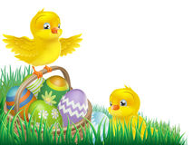 Easter chicks and egg basket. An Easter chicks and Easter egg basket isolated corner design element Royalty Free Stock Photos