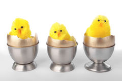 Easter chicks on egg cups over white Royalty Free Stock Photography