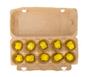 Easter chicks in an eggbox Royalty Free Stock Photo