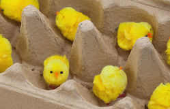 Easter chicks in an eggbox Royalty Free Stock Images