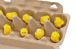 Easter chicks in an eggbox. On white Stock Photos