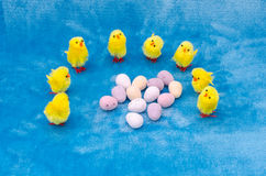 Easter chicks and eggs Royalty Free Stock Images