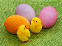 Easter chicks with eggs Stock Photos