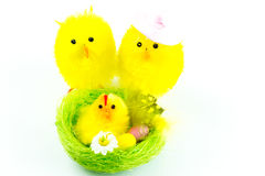 Easter chicks family Royalty Free Stock Image