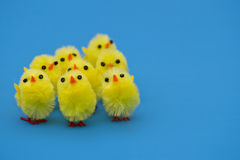 Easter chicks. Fluffy easter chicks on blue background Royalty Free Stock Images
