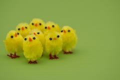 Easter chicks. Fluffy easter chicks on green background Stock Images