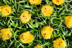 Easter Chicks On Green Grass. Stock Photography