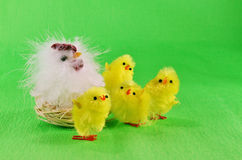 Easter chicks and mother hen Stock Photo
