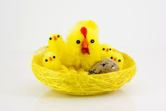Easter chicks in nest Stock Image