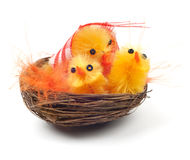 Easter chicks in a nest Stock Image