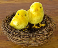 Easter chicks in a nest Royalty Free Stock Photography