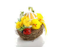 Easter chicks on nest Stock Photo