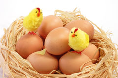 Easter chicks in the nest Stock Image