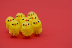 Easter chicks. On red background Royalty Free Stock Photo