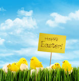 Easter chicks with sign against sky background Royalty Free Stock Images