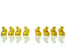 Easter chocolate bunnies Royalty Free Stock Images