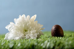 Easter chocolate eggs and flower scene Royalty Free Stock Image