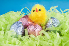 Easter chocolate eggs and a yellow chicken. Easter chocolate eggs, wrapped in shiny colorful foil and a yellow fluffy chicken toy in the green shredded tissue stock photos