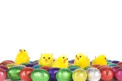 Easter chocolates with yellow chickens Royalty Free Stock Image
