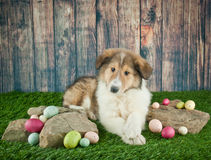 Easter Collie Puppy. Cute Collie puppy laying in the grass with rocks and Easter eggs around her royalty free stock photo