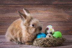 Easter color eggs in nest and bunny on wood Stock Photography