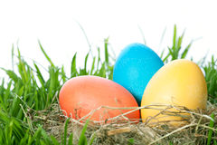 Easter color eggs in nest on green grass Royalty Free Stock Images