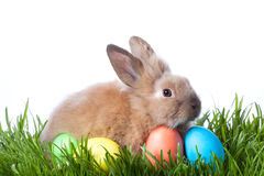 Easter color eggs and rabbit on green grass Stock Image