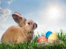 Easter color eggs and rabbit on green grass under blue sky Stock Photos