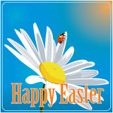 Easter colored  background with camomile and ladybird Royalty Free Stock Photography