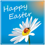 Easter colored background with camomile and ladybird Royalty Free Stock Image