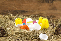 Easter colored eggs in the hay. Little newborn chick. Easter eggs in the hay. Little newborn chick on the blackboard Royalty Free Stock Image