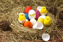 Easter colored eggs in the hay. Little newborn chick. Easter eggs in the hay. Little newborn chick on the blackboard Stock Photos
