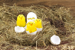 Easter colored eggs in the hay. Little newborn chick. Easter eggs in the hay. Little newborn chick on the blackboard Royalty Free Stock Images
