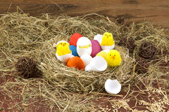 Easter colored eggs in the hay. Little newborn chick. Easter eggs in the hay. Little newborn chick on the blackboard Royalty Free Stock Photos