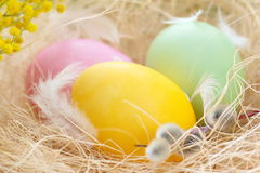 Easter colored eggs Stock Image