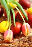 Easter colored eggs and tulips Royalty Free Stock Photos