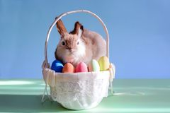 Easter eggs in basket with grass and rabbit royalty free stock photos