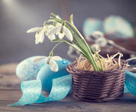 Easter. Colorful blue eggs and spring snowdrop flowers Royalty Free Stock Images