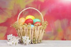 Easter colorful eggs in basket, spring cherry or apricot flowers Stock Photos